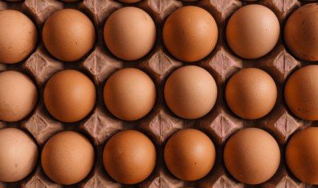 Vente d'œufs Plateau des Millevaches